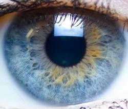 verschillende vormen ogen